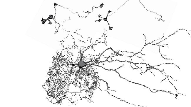 Neurons, Jnl of NScse 2012.